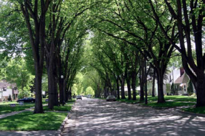 http://www.walkable.org/assets/downloads/22%20Benefits%20of%20Urban%20Street%20Trees.pdf