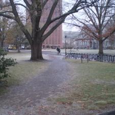 Red Oak tree, east of Bartlett Hall